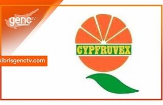 Cypfruvex'in sıkma tesislerine ürün satan üreticilere...