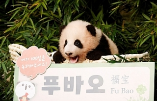 Güney Kore'de doğan ilk panda dünyaya tanıtıldı