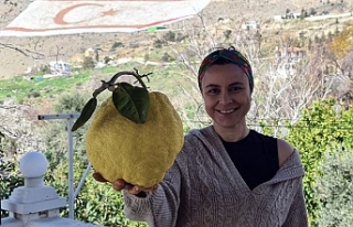 2kg'ın üzerindeki limon açık arttırmayla...