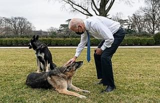Biden'ın köpeği 'Major', bir kişiyi...