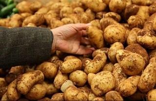 Sofralık patates ihracatına 40 kuruşluk destek