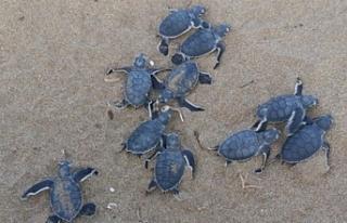 Kaplumbağaları Koruma Cemiyeti Dünya Çevre Günü...