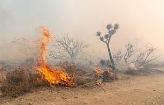 Dilekkaya'da yangın