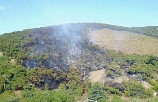 Heybeliada'daki orman yangını kontrol altına...