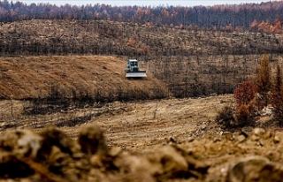 Antalya'da yanan ormanlar 100 milyon fidanla...