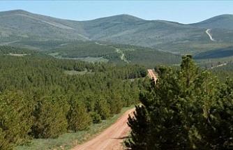Orman Haftası ve Ağaç Bayramı bugün etkinliklerle başlıyor