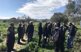 Büyükkonuk'ta zeytin ağacı bakımı eğitimi