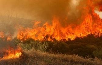 Tirmen ile Yamaçköy arasına düşen yıldırım yangına neden oldu... 90 ağaç zarar gördü