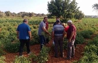 Tarım Dairesi, Paşaköy'de üreticilere eğitim verecek