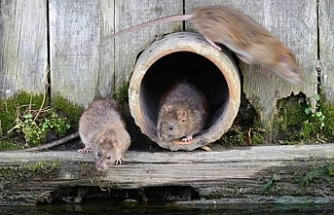 ABD'de bir kadının yaşadığı karavandan 320 fare çıktı