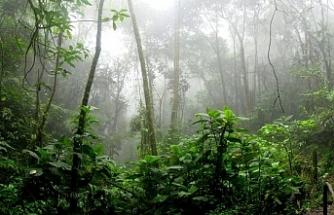 Amazon'daki ormansızlaşma 2008'den bu yana en yüksek seviyesinde