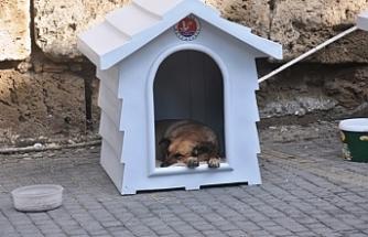 Girne Belediyesi köpekler ile ilgili çalışmalarını sürdürüyor