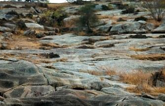 Bu fotoğrafa çok dikkatli bakın, kayalıklara gizlenen leoparı kimse bulamıyor