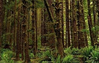 Antarktika'da 90 milyon yıl önce yağmur ormanı bulunduğuna dair kanıt elde edildi