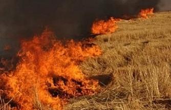 15 dönüm biçilmemiş arpa yandı
