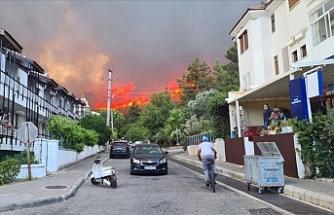 Marmaris ve Milas'ta ormanlık alanda yangın çıktı