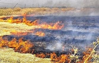 Yılmazköy'de arazi yangını