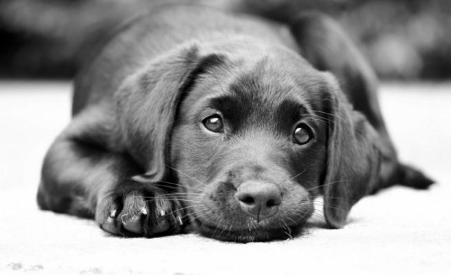 ABD'nin California eyaletinde Pet Shop'lar sadece 'kurtarılmış' hayvanları satabilecek