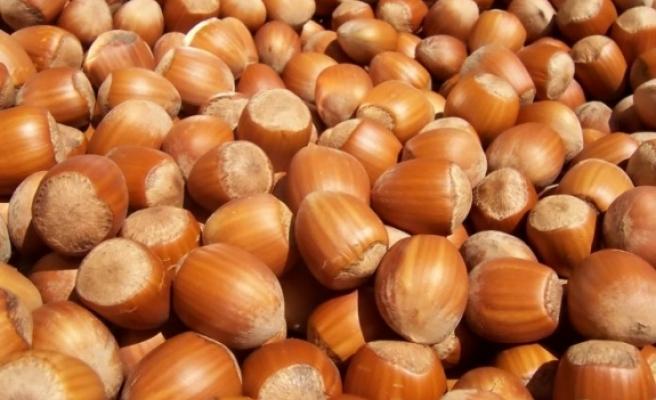 'Türkiye'nin tarım ürünleri ihracatının önemli bir kısmını fındık sağlıyor'
