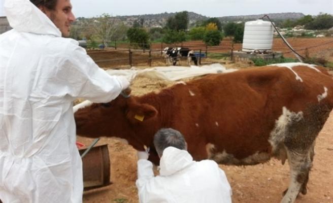 Hayvan üreticilerine yönelik bilgilendirme toplantıları düzenleniyor