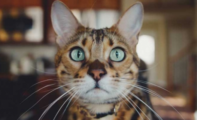 Bilim insanları: Kediler yok edilmeli