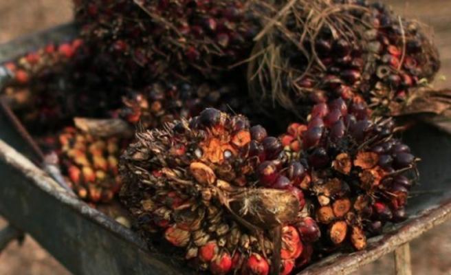 Endonezya ve Malezya'dan AB'ye palm yağı itirazı