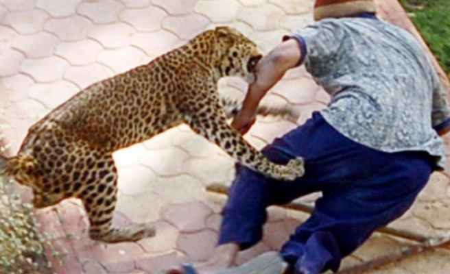 Hindistan'da köylülere saldıran leopar öldürüldü