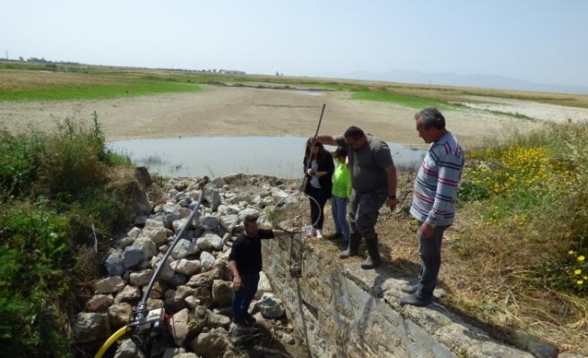 Sazan balıkları Ayluga göletine taşındı