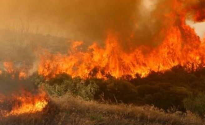 Aradan 24 yıl geçti...8 Bin hektarlık alan yok olmuştu
