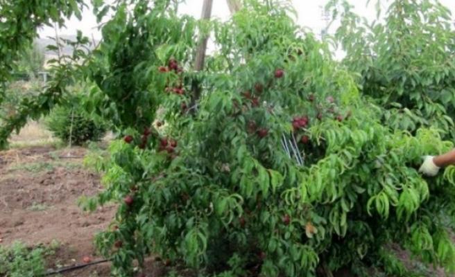 2 ithal 6 da yerli üründe zirai ilaç kalıntısına rastlandı