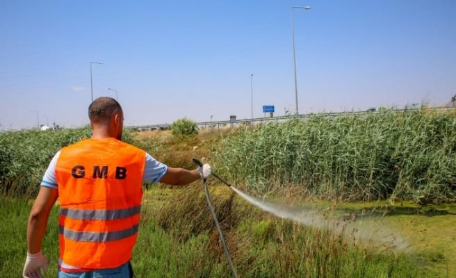"""Gazimağusa'da """"Batı Nil Virüsü"""" ile ilgili çalışmalar yoğunlaştı"""