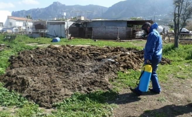 Girne Belediyesi, sivrisinek ile mücadele çalışmalarını yoğunlaştırdı