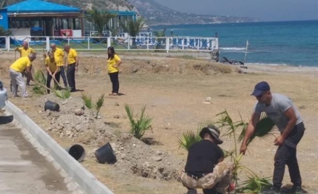 Güzelyalı Halk Plajı Ağaçlandırıldı