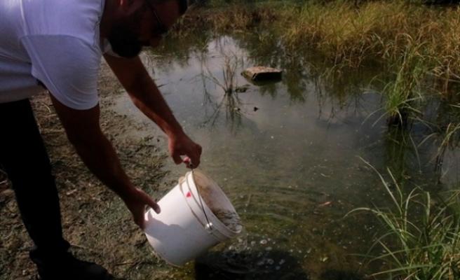 Çanakkale Göleti'ne sivrisinek larvalarını yiyen balıklar bırakıldı