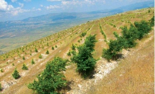 Çölleşme tehlikesine karşı Lefkoşa'ya 300 bin ağaç
