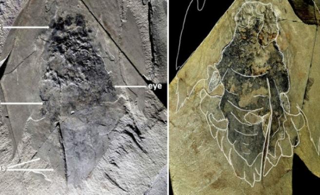 Etiyopya'da insanoğlunun yüksekte kurduğu en eski yaşam alanı