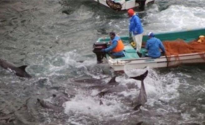 Japonya'da tartışmalı av başladı