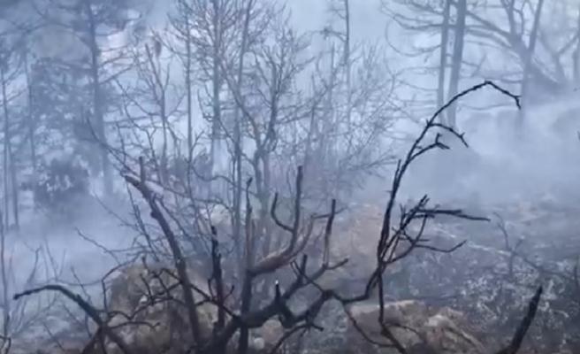Kantara bölgesinde yangın