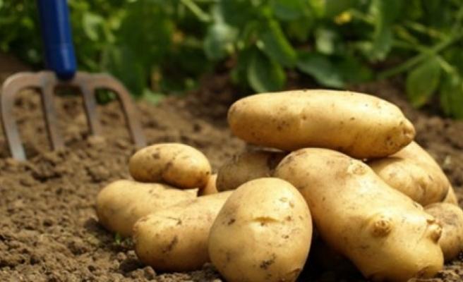 Patates beyanlarına ilişkin yapılan itirazlar askıya alındı