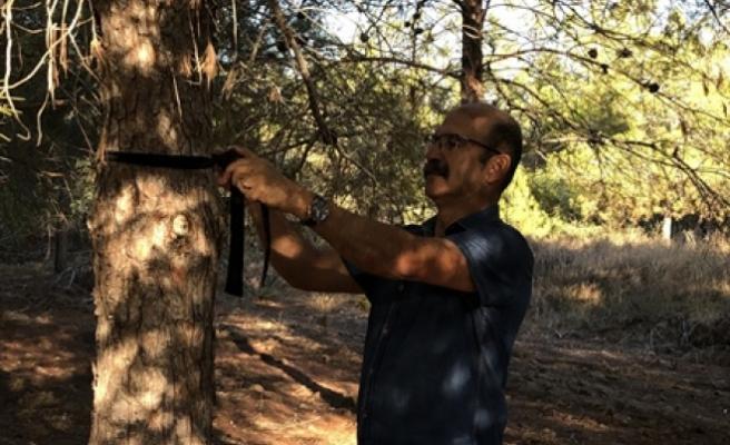 Salamis ormanlarına kuş yuvası yerleştirme devam edecek
