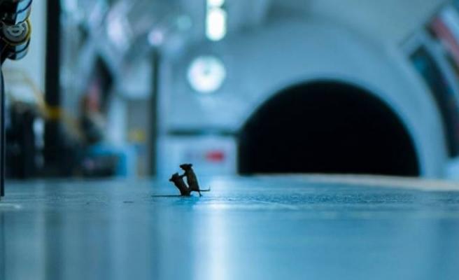 Yemek için kavga eden farelerin fotoğrafı, Doğal Yaşam Ödülü'nün sahibi oldu