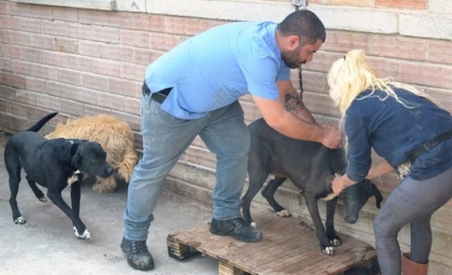 Barınaktaki köpeklerin karma aşıları yapıldı