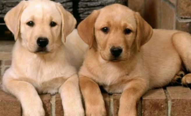 Girne Belediyesi, 'Köpek Bulundurma Ruhsatı' çıkarılması için çağrıda bulundu