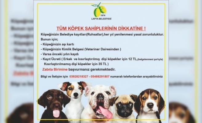 Lapta Belediyesi'nden köpek sahiplerine ruhsat uyarısı