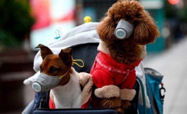 Virüs Belçika'da insandan hayvana bulaştı