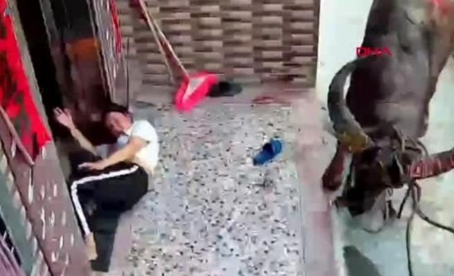 Çin'de bir anne ve bebeğine bufalo saldırdı