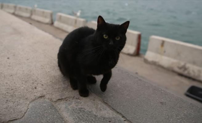 Vietnam'da siyah kedileri öldürüp 'Kovid-19'a çare diye yiyorlar' iddiası