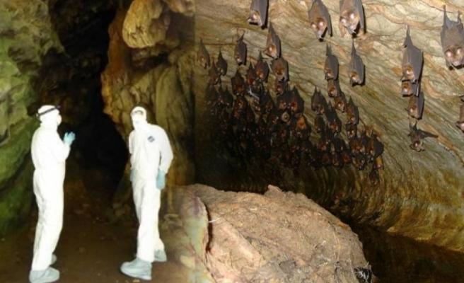 Virüs avcıları corona virüs türlerini tespit ediyor