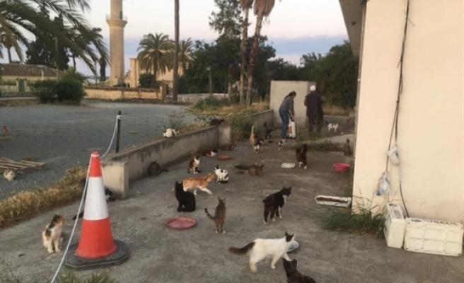 Hala Sultan Tekkesindeki kediler için bakım ve yem yardımı