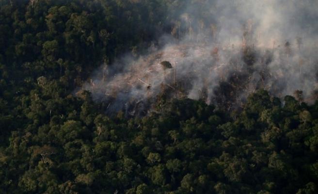 Brezilya'da Amazon'daki ormansızlaşma salgın döneminde artış gösterdi